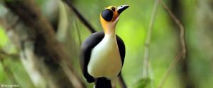 ghana-birding