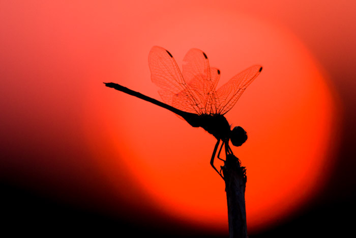 Dragonfly-web