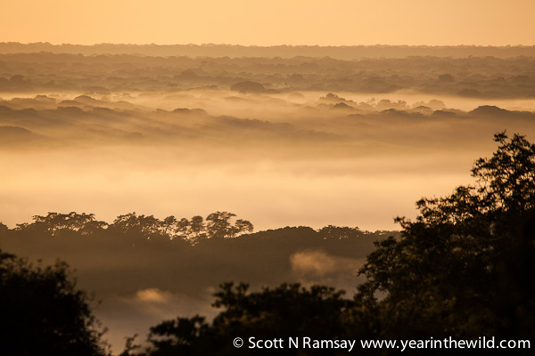 Early morning, looking out over the Pongola River valley. This photo taken from the camp at Ndumo.
