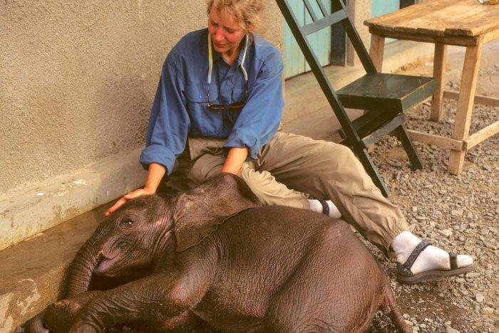 Elephant Rescue Tanzania 1997