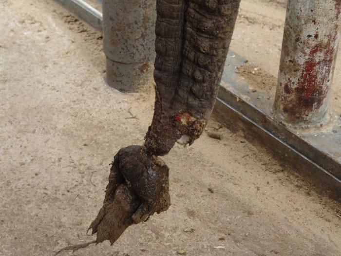 elephant-knysna-cruelty