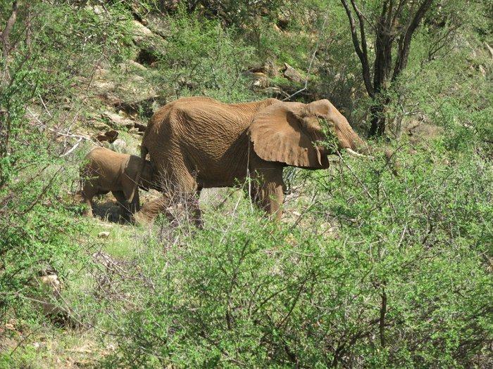 elephant-with-baby