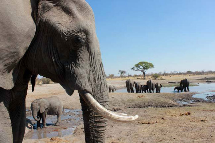 elephants-in-zimbabwe