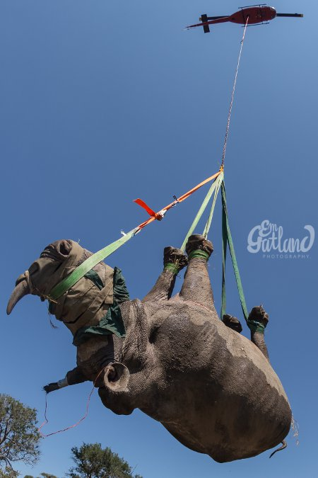 rhino-flying