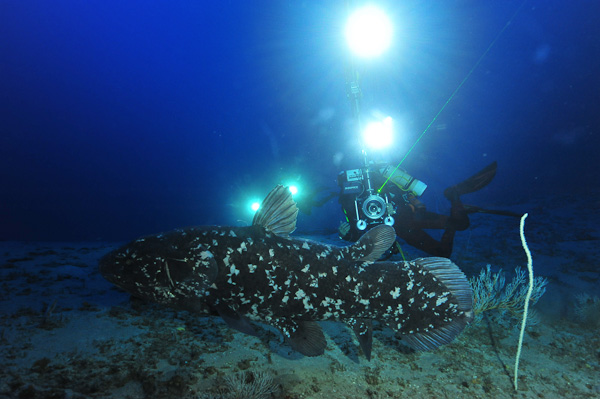 A beautiful specimen of coelacanth...being filmed with elaborate lighting. At these depths, there is very little sunlight penetrating the water and bright torches and lights are critical. Unsurprisingly, coelacanths have big eyes that are adapted to seeing in the dark.