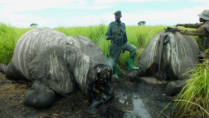 Helicopter massacre site © African Parks