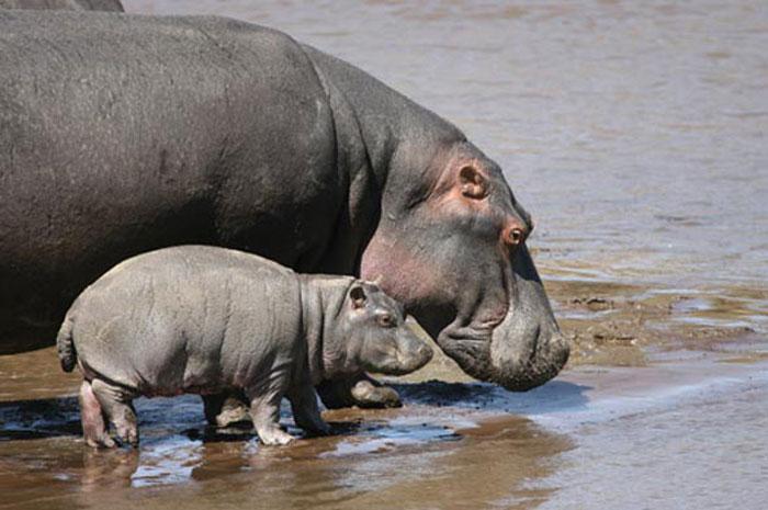 Hippo-Elephant-tours