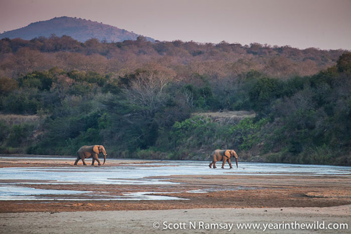 Two bull elephants, coming to have a drink at sunset with us.