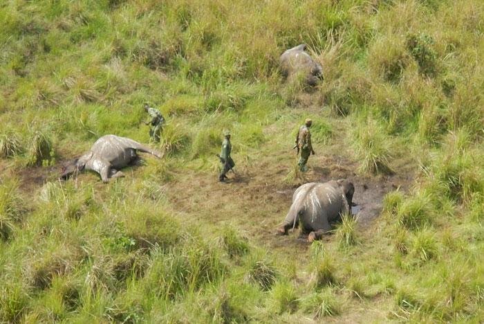 Massacre site © African Parks