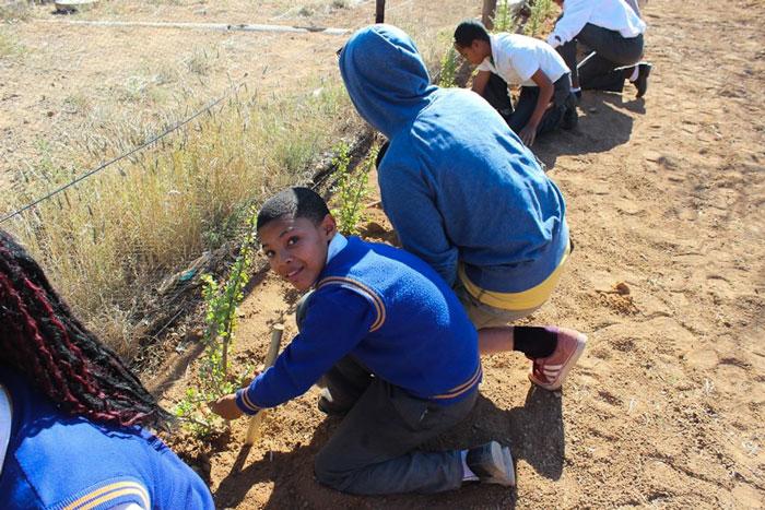 SamaraSpekboom-Children-planting