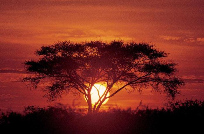 elefant-tours-acacia-sunset