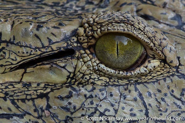 The St Lucia croc centre near the southern entrance to the park makes for excellent photographic opportunities.