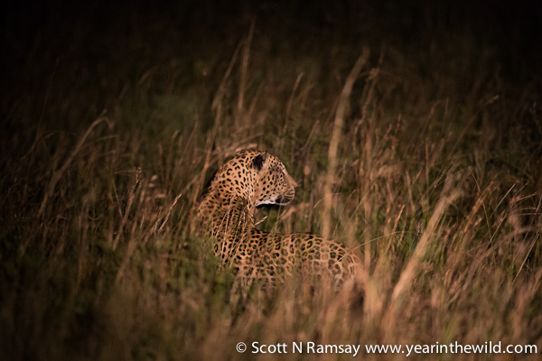 Our first view of the leopard...hows that camouflage?!