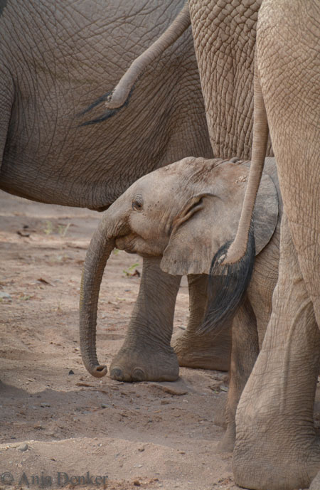 © Anja Denker Wildlife Photography & Visual Art