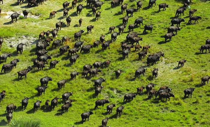 Okavango Delta (Botswana) © Department of Wildlife and National Parks / Ian Johnson