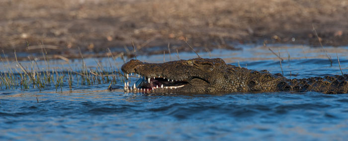 Croc-Cat-Fish-River