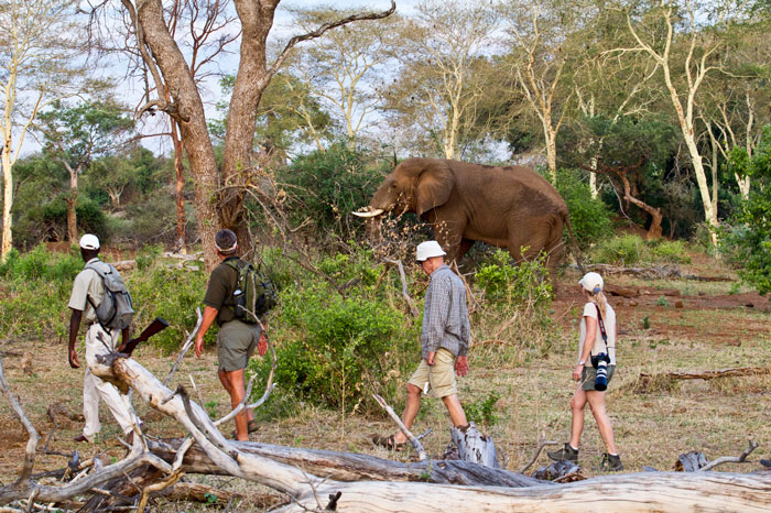 Elephant-walking-picture