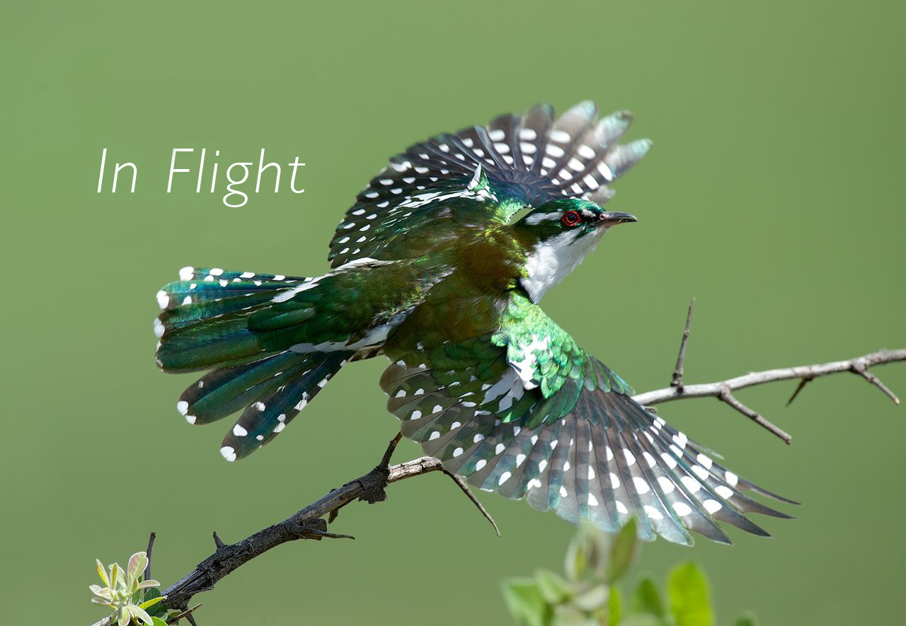 in-flight-featured