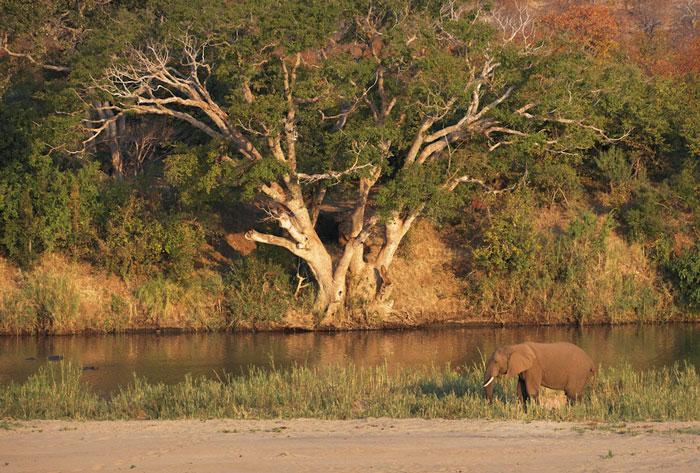 Kruger-river-elephant