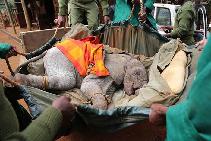 Murit-baby-elephant-Kenya