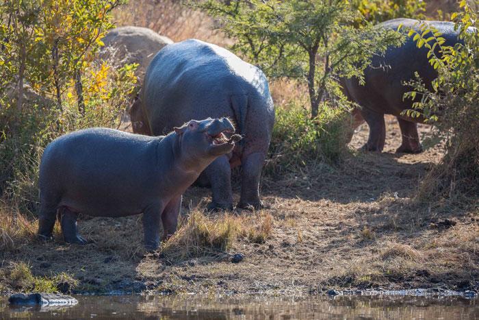 Pilanesberg-SouthAfrica