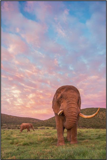 Kariega's majestic bull Elephant. ©Brendon Jennings