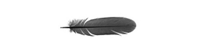 feather-on-a-white-background-copy