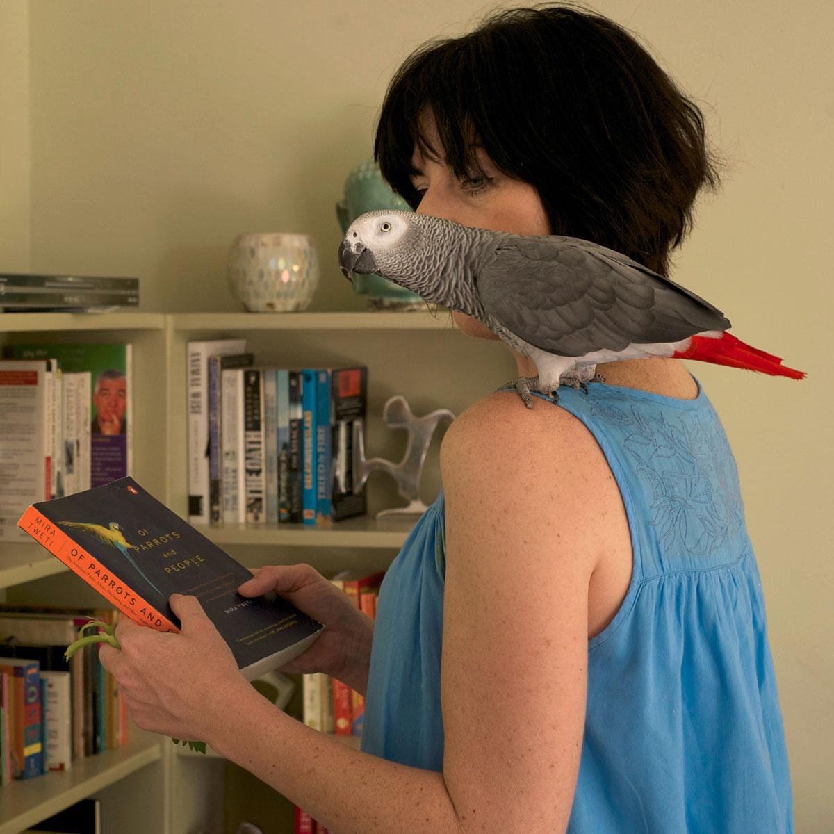 grey-parrot-pet