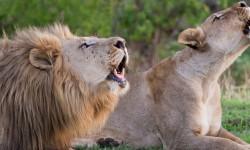 madikwe-photo-safari-francois-van-heerden