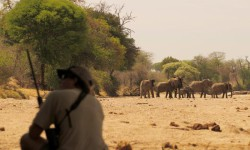 walking-ruaha