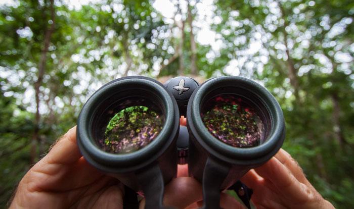 The Arabuko Sokoke forest is a birdwatchers paradise