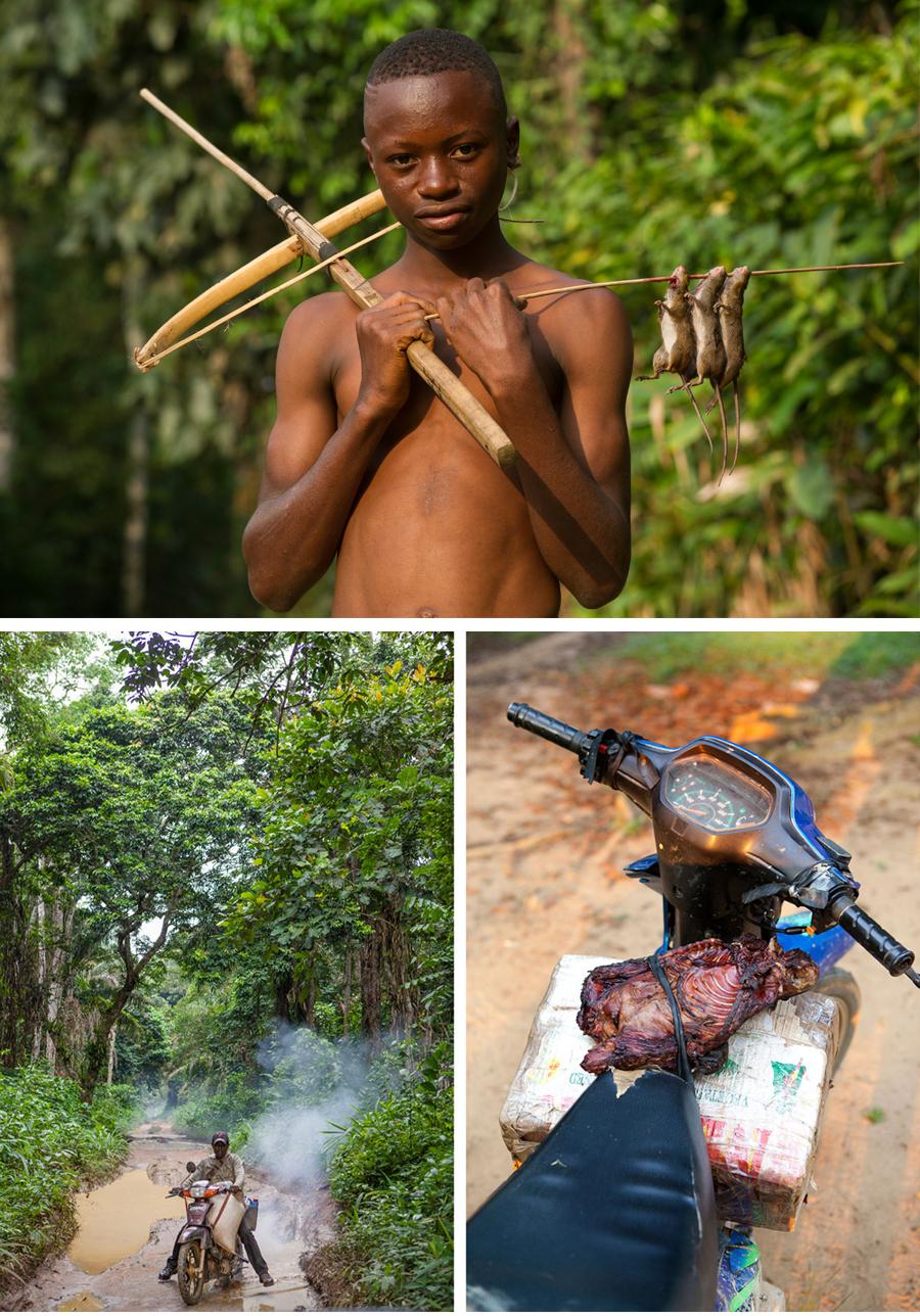 Congo-gorllias-bush-meat-2©Sophie-Smith