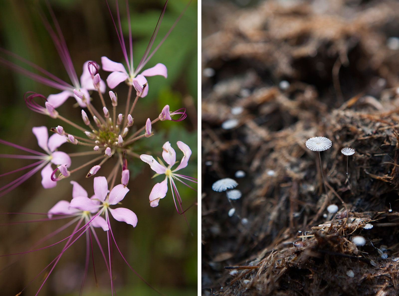 Congo_flowers-shrooms-Sophie-Smith_Go2Africa_021