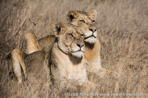 A brother and sister near Skukuza, enjoying the early morning rays.