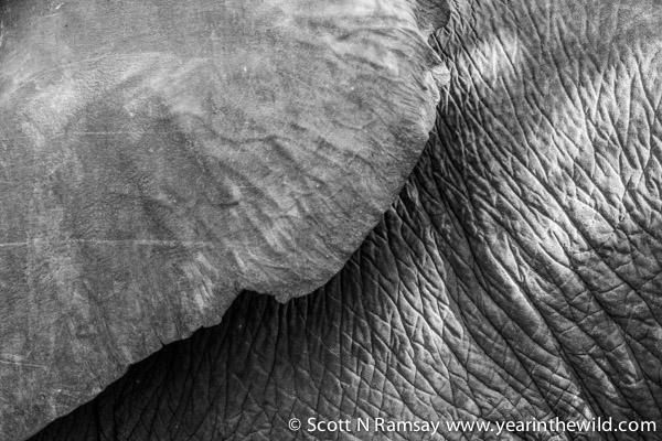 Elephant textures.
