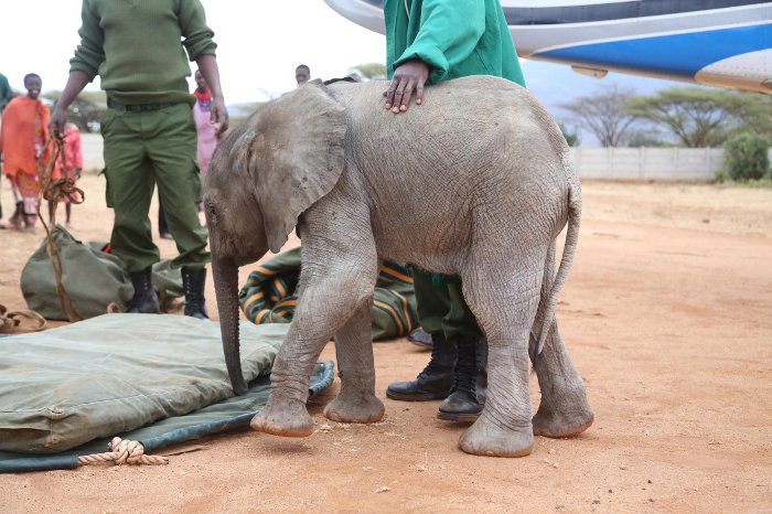 Murit-baby-elephant-Kenya-David-Sheldrick-Wildlife-Trust