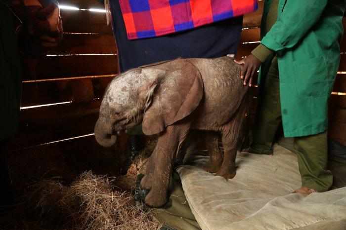 Ndotto-elephant-barn-David-sheldrick-wildlife-trust