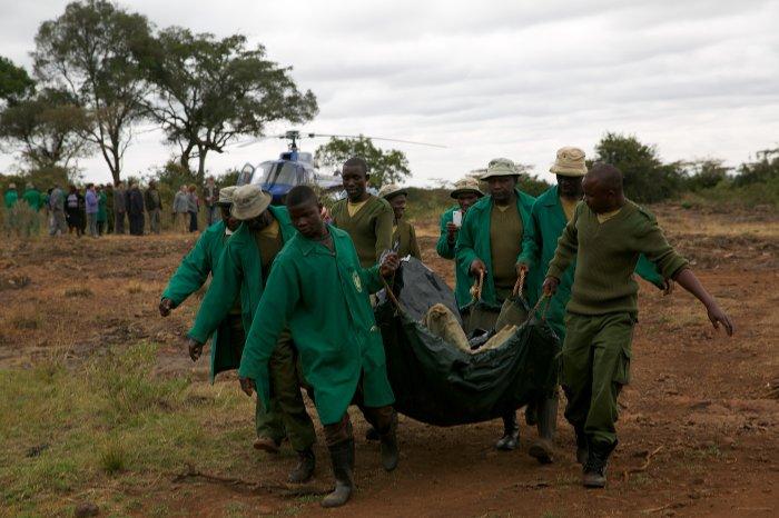 Ndotto-elephant-rescue-David-Sheldrick-wildlife-trust