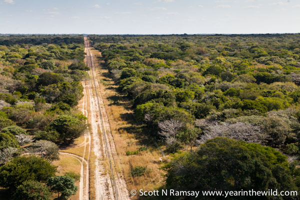 The thin, paltry fence-line that separates South Africa's Tembe Elephant Park (on the left) and Mozambique on the right. As has been proven in Kruger, Mozambique is the arch-enemy of wildlife and rangers in South Africa.