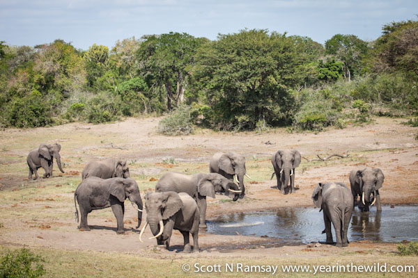 Probably the best place in South Africa to see big bull elephants - Mahlasela waterhole at Tembe.