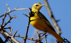 best-of-birding