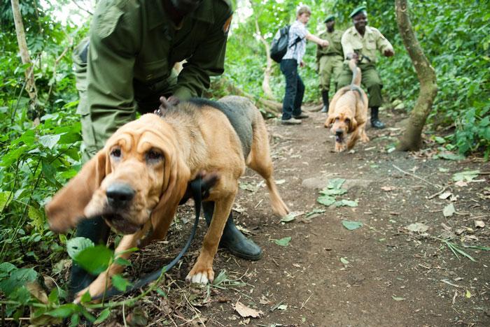 © Virunga National Park