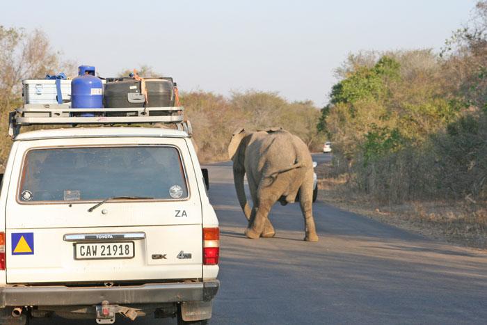 elephant-kruger