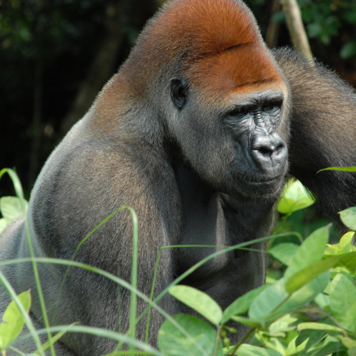 http-__en.wikipedia.org_wiki_Agreement_on_the_Conservation_of_Gorillas_and_Their_Habitats