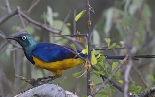 kenya-birding-trip