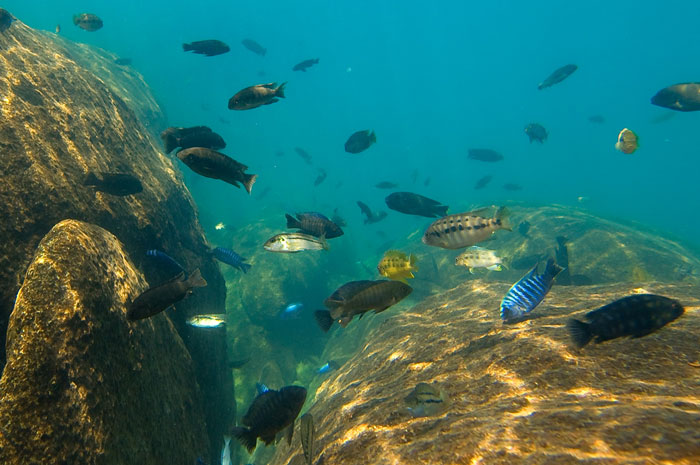 The magic of Lake Malawi - Africa Geographic