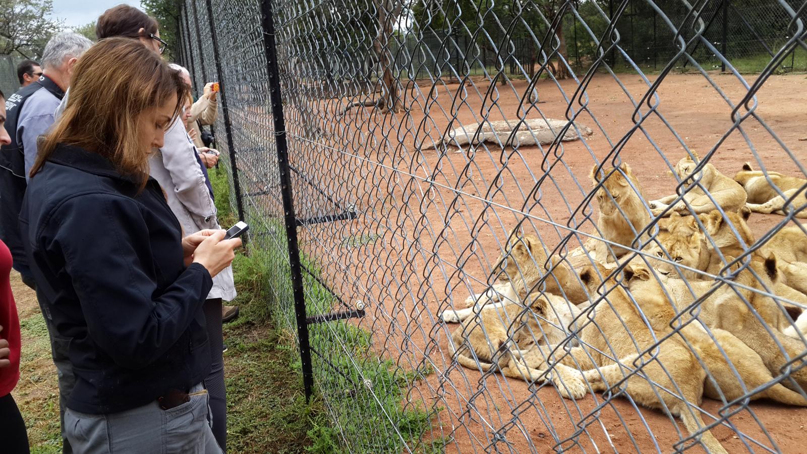 lion-king-3-simon-espley