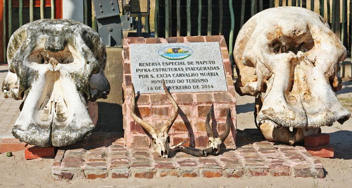 maputo-elephant-reserve