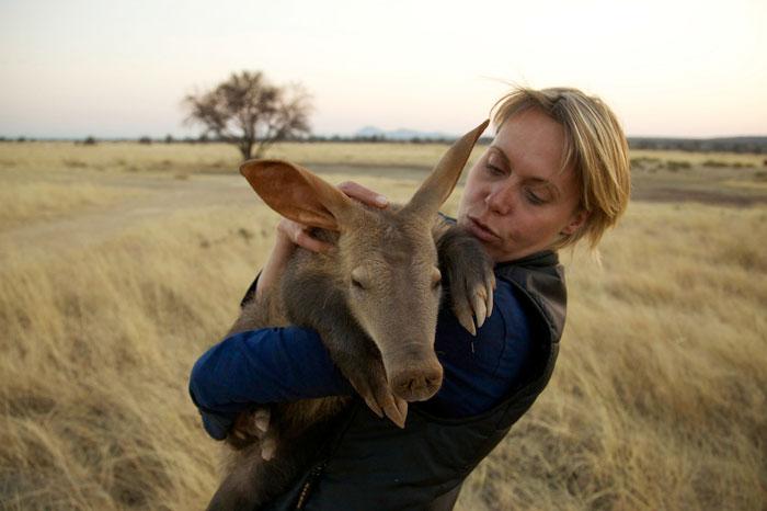 rescue-aardvark