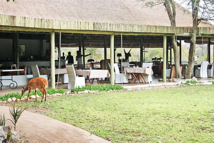 Wildlife coming to visit at Tanda Tula Safari Camp